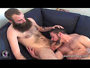 two bearded gay dudes are sucking hard gay porno