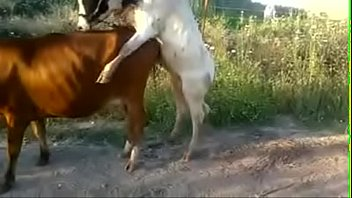 Rough Sex With Two Animals When fuck Hard