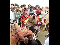 camel sucked boobs of rajasthani girl