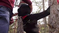 Tied To A Tree On A Sexy Outfit  Masked And Out