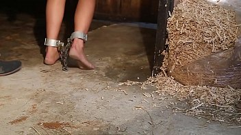 Luna shackled in a stables