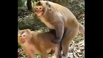 Funny animal hindi sex video