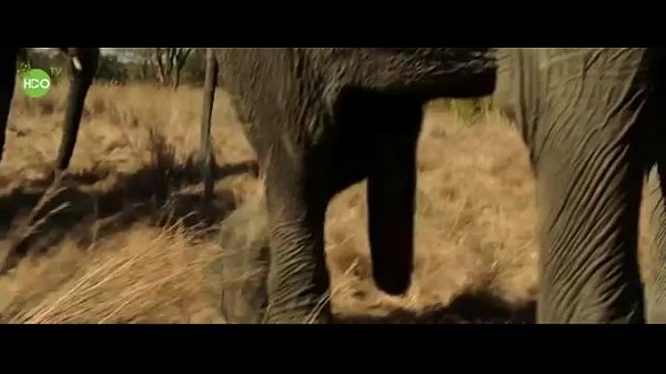 Of girl with pics elephant porn