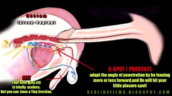 Shemale Anatomy - Xvideoscom-4472
